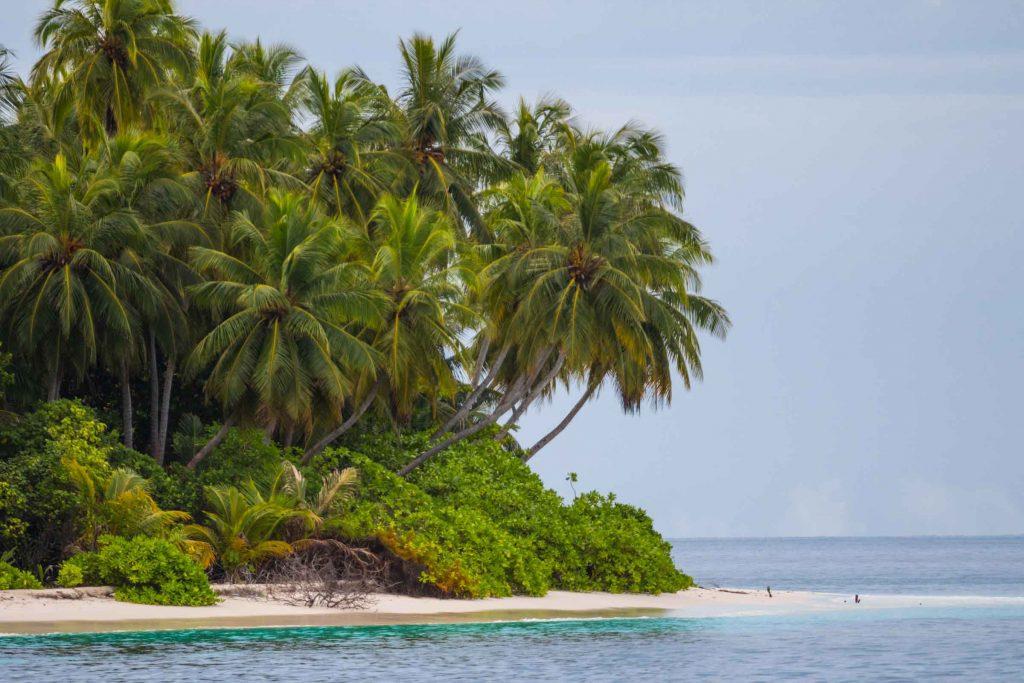 טיולי גלישה במלדיביים - נוף קסום ואינסופי, עצי קוקוס ו50 גוונים של כחול